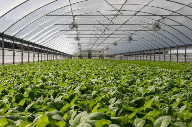 Klimatsmart jordbruk